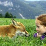 Мой ласковый и нежный зверь: 7 фильмов о дружбе людей и животных